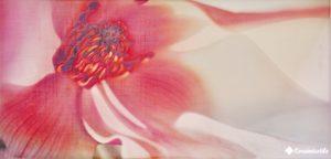 dec. irina rosa 25×50 декор